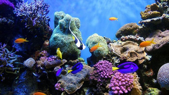 mořské menstruační houby